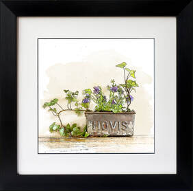Delightful ink & watercolour effect illustration featuring a vintage Hovis tin planted with Viola & Ivy