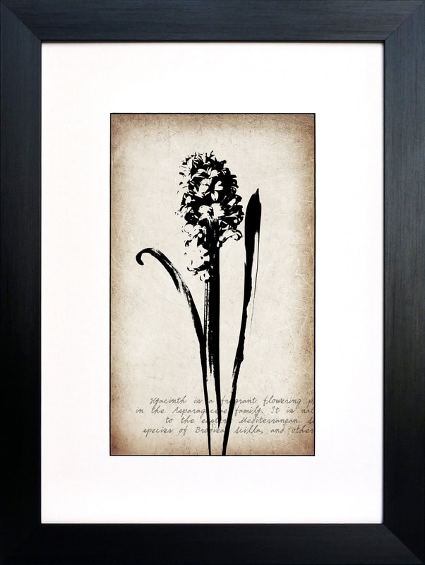 Hyacinth flower on vintage sepia background botanical print by Fiona Gray