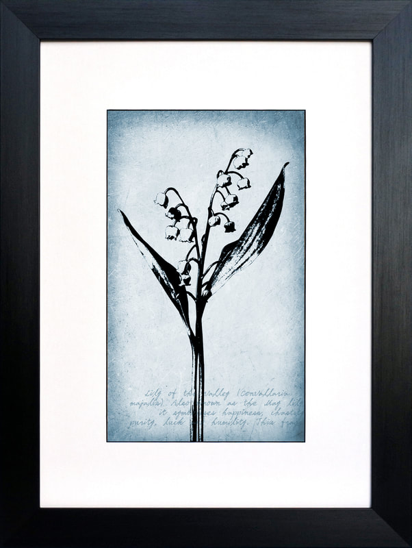 Lilly of the Valley botanical illustration by Fiona Gray