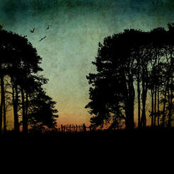 Fiona Gray print of trees silhouetted against a tonal background