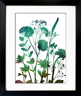 Sea Holly Eucalyptus Snowball Veronica flower art by Fiona Gray