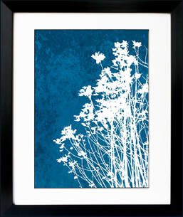 Fiona Gray print 'Wild Flowers No.1' . White flower silhouette against a Cyan Blue background