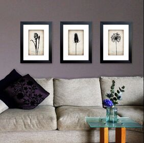 Hyacinth, Teasel & Allium botanical framed prints displayed in a home by Fiona Gray