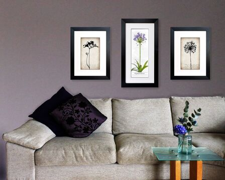 3 botanical illustrations, Freesia, Agapanthus, Allium seed head by Fiona Gray