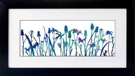 Grape Hyacinths Chronodoxia flower print by Fiona Gray