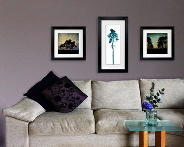3 prints by Fiona Gray displayed on a lounge wall