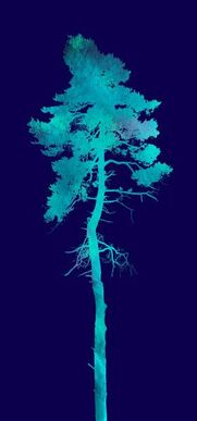 Tree silhouette with blue background