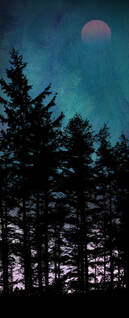 Trees at Dusk 2 fine art print by Fiona Gray. Pine tree silhouette against a dramatic Turquoise & Purple background, with the moon faintly showing